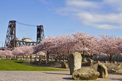 Kirschblüte, die zur Frühlings-Zeit blüht Lizenzfreie Stockbilder