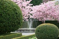 Kirschblüte in einem Park stockfotografie