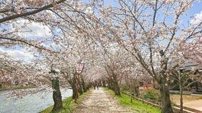 Kirschblüte-Fluss Stockbild