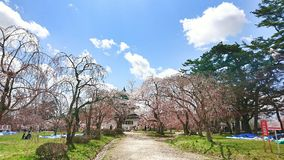 Kirschblüte-Fluss Lizenzfreies Stockbild