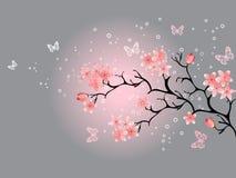 Kirschblüte, grauer Hintergrund Lizenzfreie Stockfotos
