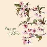 Kirschblüte-Grußkartenschablone Lizenzfreies Stockfoto