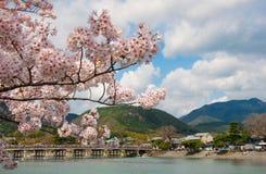 Kirschblüte im Frühjahr Stockfotos