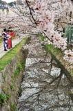 Kirschblüte im Frühjahr stockfotografie