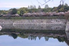 Kirschblüte im Park Stockfotos