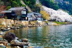 Kirschblüte-Jahreszeit in Japan Lizenzfreies Stockbild