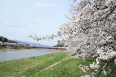 Kirschblüte in Kakunodate Stockbild