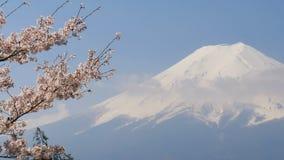 Kirschblüte-Kirschblüte mit Mt Jahreszeit Fujis im Frühjahr stock video footage