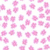 Kirschblüte-Muster auf weißem Hintergrund Lizenzfreies Stockbild