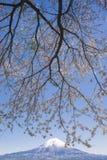 Kirschblüte-Niederlassungen und Kirschblüte-Baum am See Tanuki Lizenzfreies Stockbild