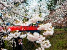 Kirschblüte oder japanische blühende Kirsche in Japan Stockfoto