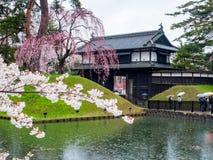 Kirschblüte oder japanische blühende Kirsche in Japan Stockbilder