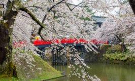 Kirschblüte oder japanische blühende Kirsche in Japan Stockbild