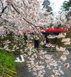 Kirschblüte oder japanische blühende Kirsche in Japan Stockfotografie