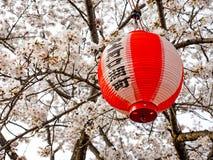 Kirschblüte oder japanische blühende Kirsche in Japan Lizenzfreie Stockbilder