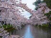 Kirschblüte oder japanische blühende Kirsche in Japan Lizenzfreie Stockfotos