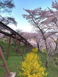 Kirschblüte in Park Funaoka Joshi in der Präfektur Miyagi, Japan Lizenzfreie Stockfotografie
