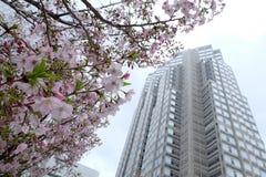 Kirschblüte shinjuku am Stadtregierungs-Gebäudeobservatorium Stockfotografie