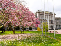 Kirschblüte in Zagreb Croatia Lizenzfreie Stockfotografie