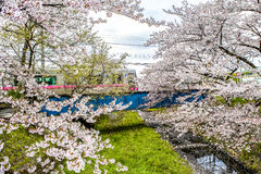 Kirschblüte, Zug, Japan Stockfotos