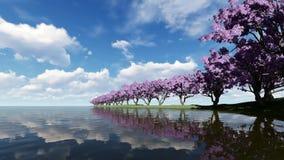Kirschblüten auf einem Kirschbaum nahe Uferfluß stock video