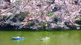 Kirschblüten bei Chidorigafuchi in TOKYO JAPAN Stockbild