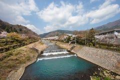 Kirschblüten an der Flussseite stockbilder