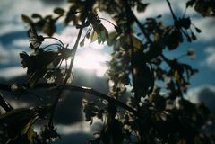 Kirschblüten, Frühling, blühende Gärten, Makrophotographie, Sonnenuntergang Stockbilder