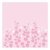 Kirschblüten - horizontal Stockfoto