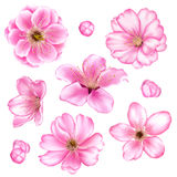 Kirschblüten-Illustrationssatz Lizenzfreies Stockbild