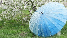 Kirschblüten im Garten Eisenbahnlinien und vages Schattenbild der Serie stock footage