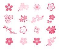 Kirschblüten-Japanerkirschblüte-Vektorikonensatz lizenzfreie abbildung