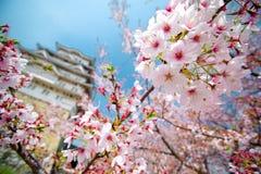 Kirschblüten Kirschblüte-Blumen Stockfoto