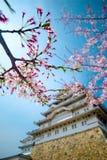 Kirschblüten Kirschblüte-Blumen Stockbild