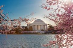 Kirschblüten mit Jefferson Memorial im Hintergrund am Gezeiten- Becken im Washington DC lizenzfreie stockfotos