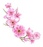 Kirschblüten-Niederlassungsillustration Stockfotos