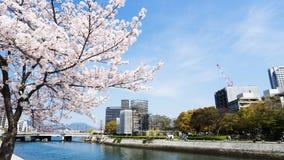 Kirschblüten oder Kirschblüte und Fluss Lizenzfreie Stockbilder