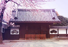 Kirschblüten in Tokyo Stockfotografie