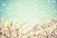 Kirschblüten und blauer Himmel mit dem Schneefallen Weinlesehintergrund mit Blumen Stockfotografie