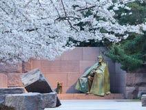 Kirschblüten und Denkmal Washington-FDR Stockbild