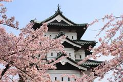Kirschblüten und japanisches Schloss Stockfotos