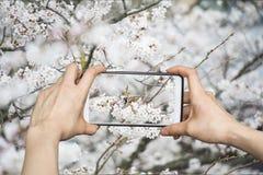 Kirschblüten und kleiner Vogel Lizenzfreie Stockfotografie