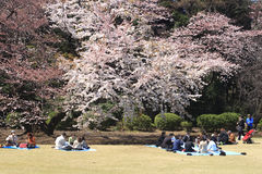 Kirschblütenfestival in Tokyo stockbild