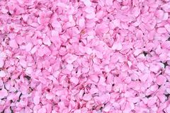 Kirschblütenhintergrund Stockfotos