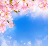 Kirschblütenhintergrund Lizenzfreie Stockfotografie