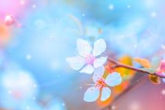Kirschbl?te-Bl?te auf Pastellhintergrund, Fr?hlingsblumen lizenzfreie stockbilder
