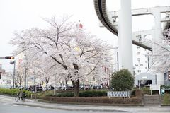 Kirschbl?ten in Chiba stockfotografie