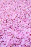 Kirschblume verlässt alle über (vertikale Perspektive) Stockbild