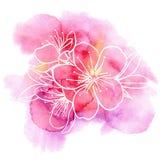 Kirschblumen auf einem Aquarellhintergrund Stockbilder