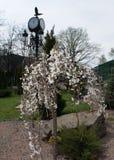 Kirsche in der Blüte, Frühlingszeit Lizenzfreie Stockfotos